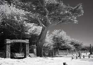 Tom Eckles, infrared cemetery
