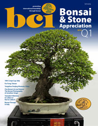BCI Bonsai & Stone Appreciation Magazine Q1 2013 cover