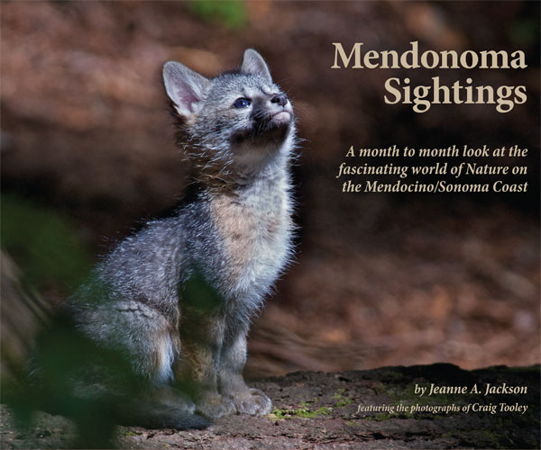 Mendonoma Sightings Throughout the Year - book cover