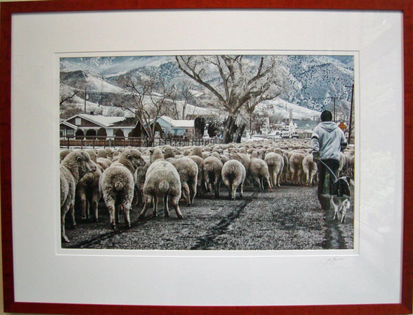 People's Choice Award, First Place: Unsheepish by Ron Bolander