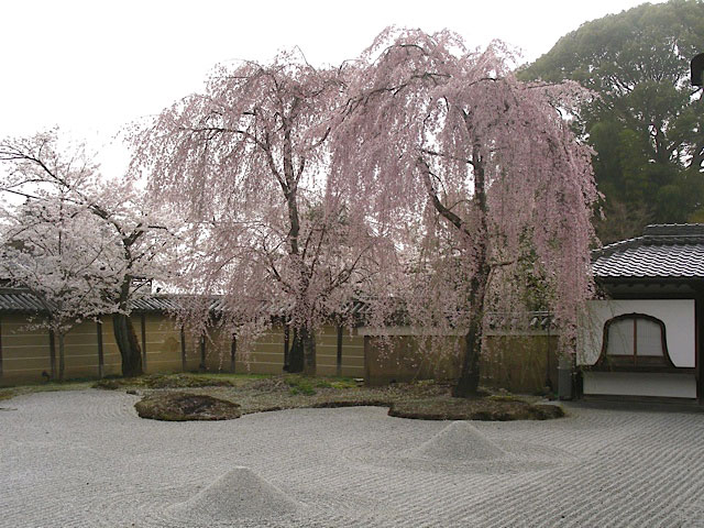 Japanese and Korean Gardens