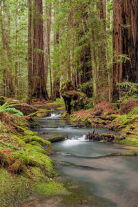 Montgomery Woods, photo by Scott Chieffo, Dolphin Gallery exhibit, July 2013