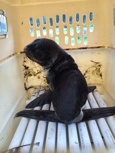 Sara Grimes marine mammal rescue lecture series 2015
