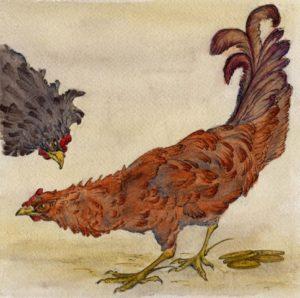 balinese-folk-tale-roosters/Elizabeth Sheets