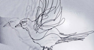 Line Wire Bird, by Jonqui Albin